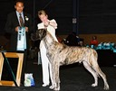 Grand Fawns Zeus for Congistador (Imp Swd), NZ Ch